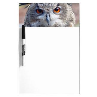 Eurasian Eagle-Owl, Uhu 02.2 Dry Erase Board
