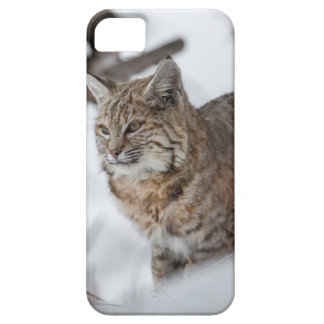 Eurasian Lynx hunting in snow iPhone 5 Covers