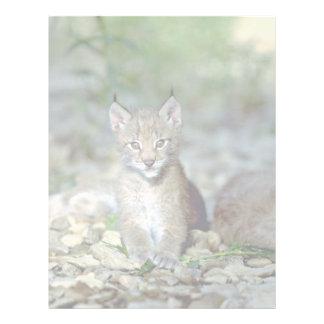 Eurasian lynx, young kitten letterhead template