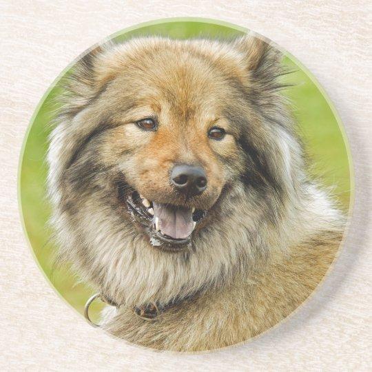 Eurasian , medium , spitz-like , dog coaster