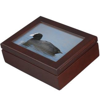 Eurasian or common coot, fulicula atra keepsake box