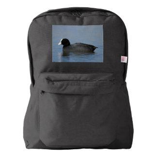Eurasian or common coot, fulicula atra, portrait o backpack