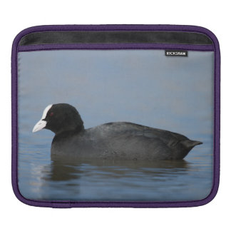 Eurasian or common coot, fulicula atra, portrait o iPad sleeve
