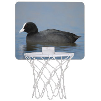 Eurasian or common coot, fulicula atra, portrait o mini basketball hoop