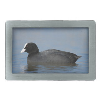Eurasian or common coot, fulicula atra, portrait o rectangular belt buckle