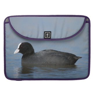 Eurasian or common coot, fulicula atra, portrait o sleeve for MacBook pro