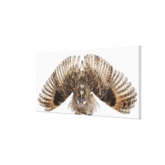 Eurasian Scops-owl - Otus scops (2 months old) 2 Canvas Prints