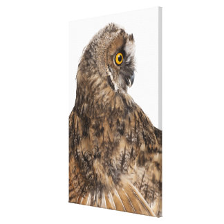 Eurasian Scops-owl - Otus scops (2 months old) Gallery Wrapped Canvas