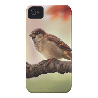 Eurasian Tree Sparrow iPhone 4 Barely There Case iPhone 4 Covers