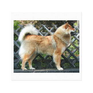 Eurasier_full Canvas Print