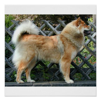 Eurasier_full Poster