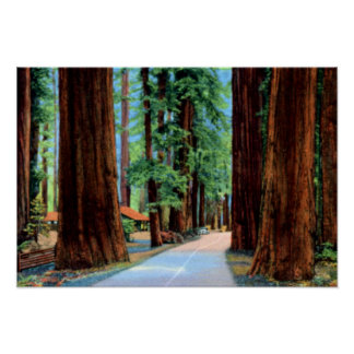 Eureka California Richardson Grove Humboldt County Poster