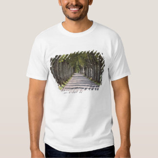 Europe, France, Cereste. Trees line this road Tee Shirts