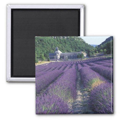 Europe, France, Provence. Lavander fields Fridge Magnets
