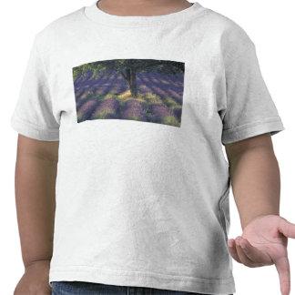 Europe, France, Provence, Sault, Lavender Tshirt