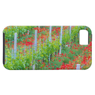 Europe, Italy, Tuscany. Colorful red poppies in Case For The iPhone 5