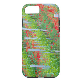 Europe, Italy, Tuscany. Colorful red poppies in iPhone 7 Case