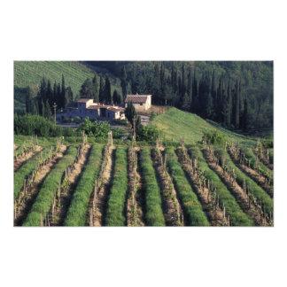 Europe, Italy, Tuscany. Scenic villa cyprus. Photographic Print