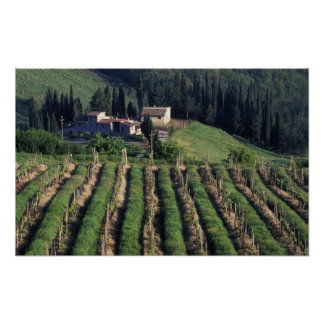 Europe, Italy, Tuscany. Scenic villa cyprus. Poster