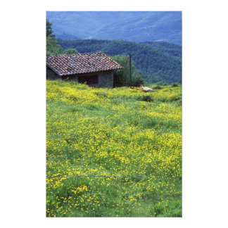 Europe, Italy, Tuscany, Siena, Chianti. Photo