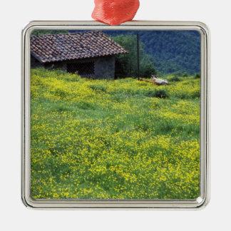 Europe, Italy, Tuscany, Siena, Chianti. Silver-Colored Square Ornament