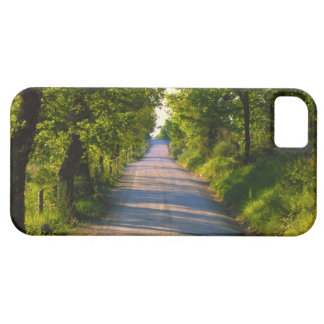 Europe, Italy, Tuscany, tree lined road iPhone 5 Covers