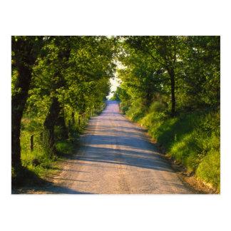 Europe, Italy, Tuscany, tree lined road Postcard