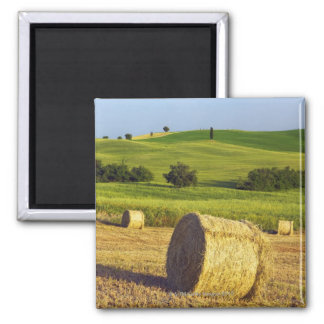 Europe, Italy, Tuscany, Val d'Orcia, Pienza - Square Magnet