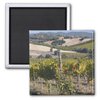 Europe, Italy, Umbria, near Montefalco, Vineyard Square Magnet