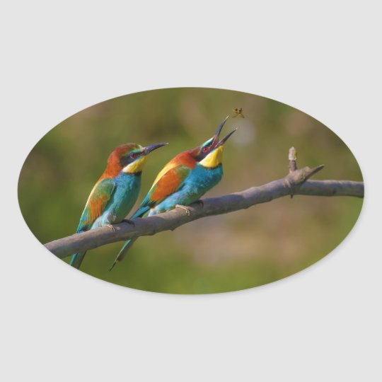 European Bee Eater Birds in Ariège France Oval Sticker