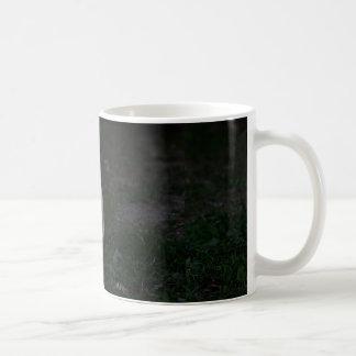 european burmese sitting coffee mug