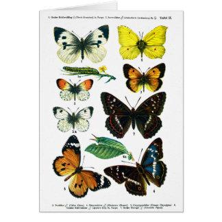 European Butterflies Plate II Card