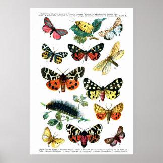 European Butterflies Poster