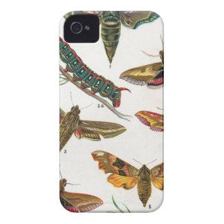 European Butterfly iPhone 4 Case