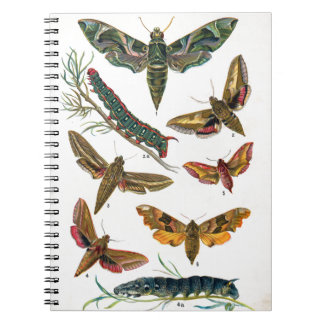European Butterfly Notebook