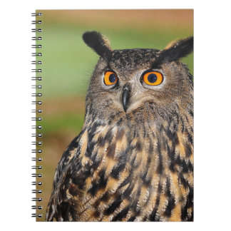European Eagle Owl Notebooks