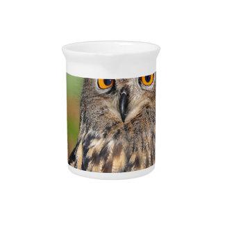 European Eagle Owl Pitcher