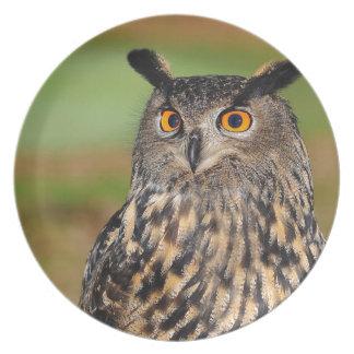 European Eagle Owl Plate