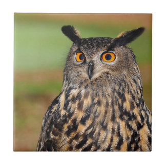 European Eagle Owl Tile