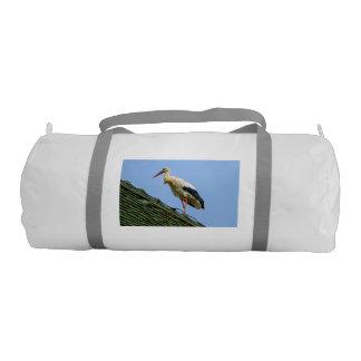 European white stork, ciconia