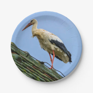European white stork, ciconia 7 inch paper plate