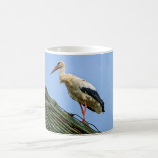 European white stork, ciconia coffee mug