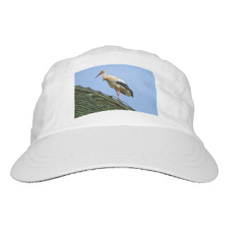 European white stork, ciconia hat