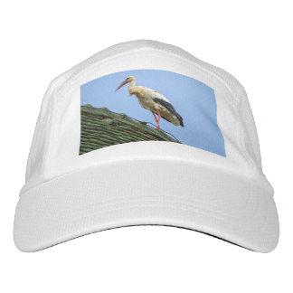 European white stork, ciconia headsweats hat