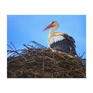 European white stork, ciconia, in the nest canvas print