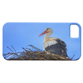 European white stork, ciconia, in the nest iPhone 5 cases