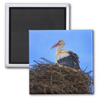 European white stork, ciconia, in the nest magnet