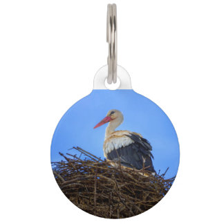 European white stork, ciconia, in the nest pet ID tag