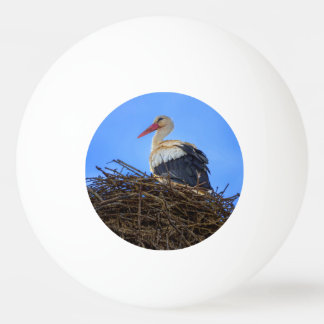 European white stork, ciconia, in the nest ping pong ball