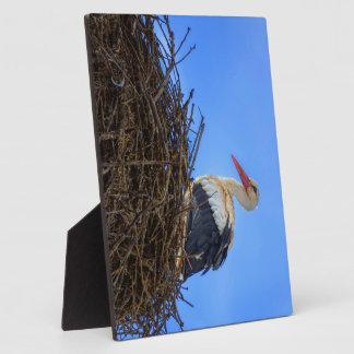 European white stork, ciconia, in the nest plaque